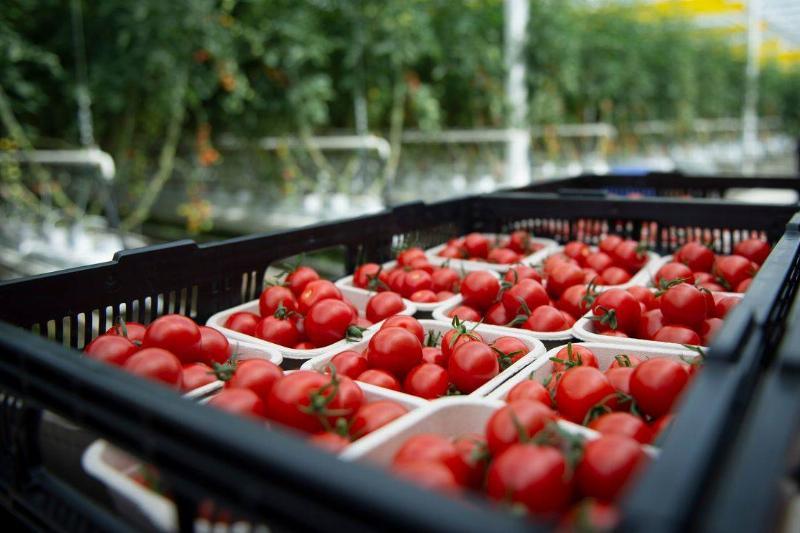 CANADA-US-AGRICULTURE-ORGANIC-FOOD