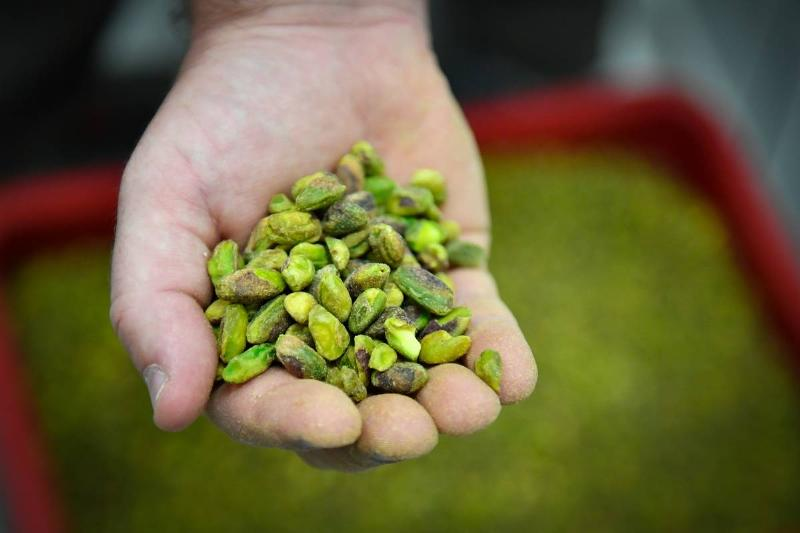 FRANCE-AGRICULTURE-ENVIRONMENT-FOOD-PISTACHIOS