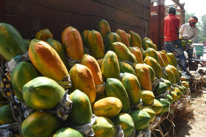 Rows of whole papayas are being sold in India.