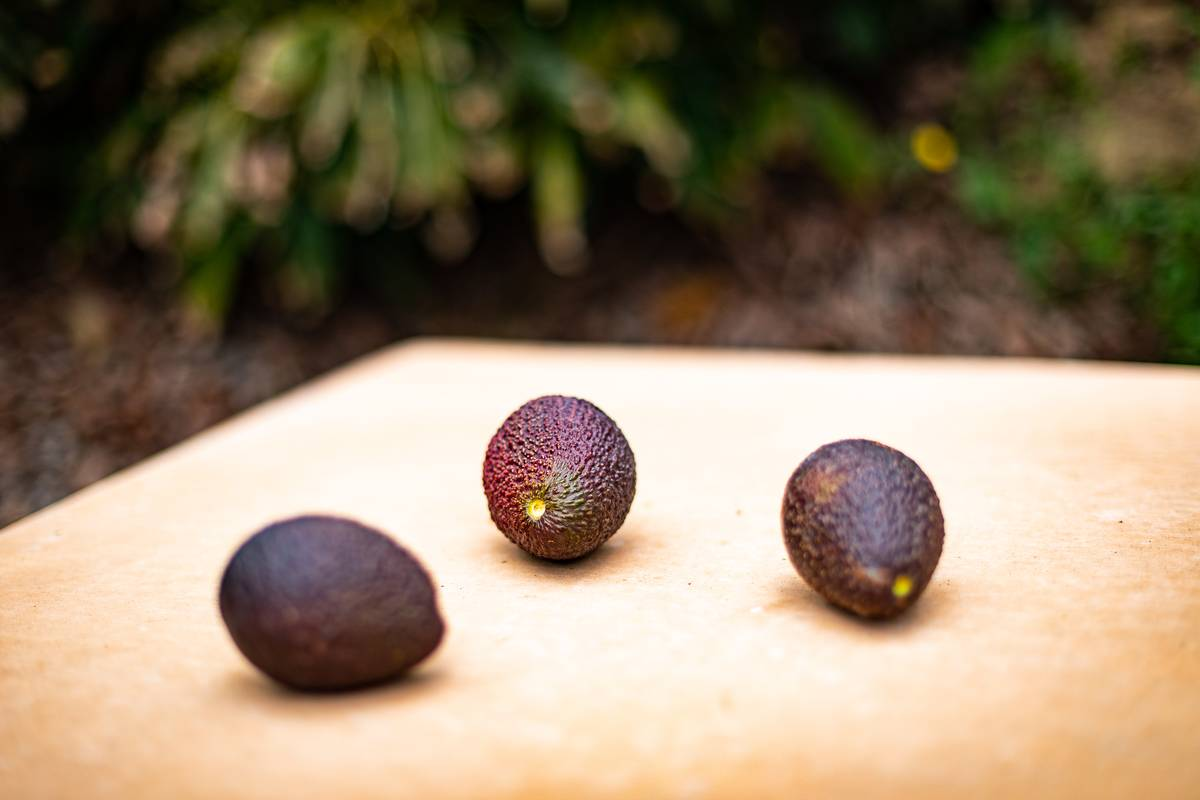 Three avocados sit on a table.