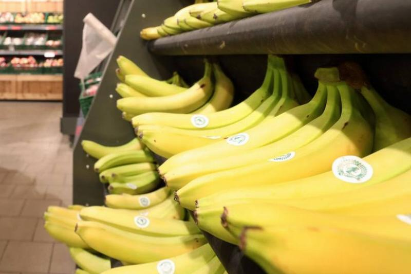 Bundles of bananas sit in rows on shelves.