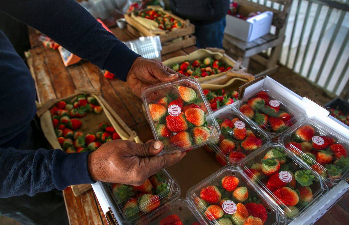 A man picks up a container of strawberries.