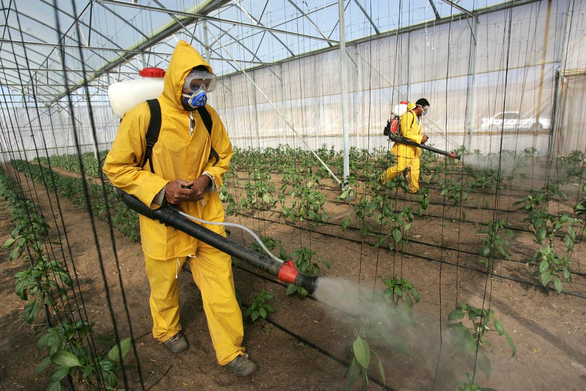 Farmers spray crops with pesticides.