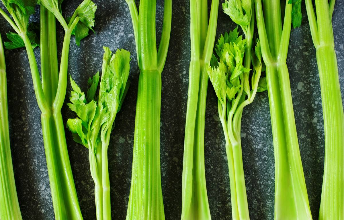 Celery's