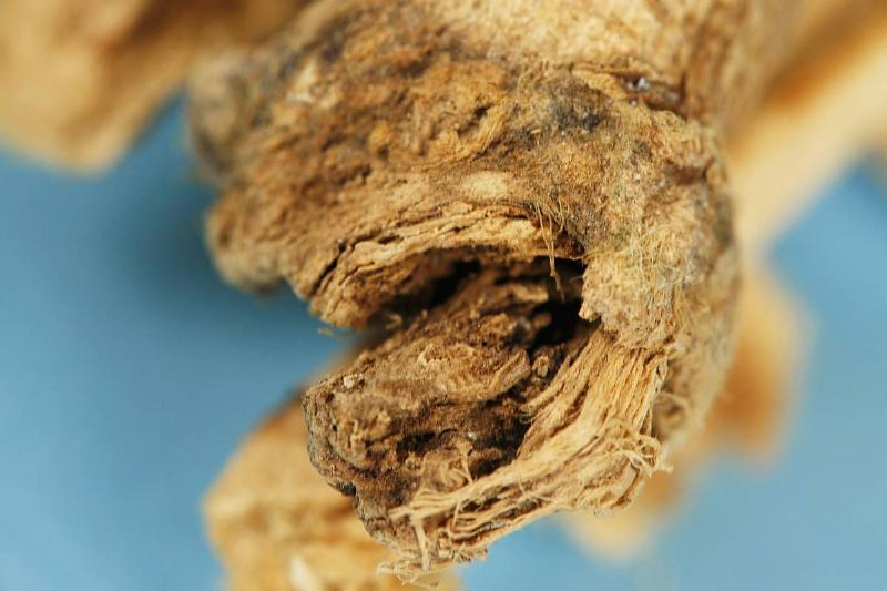 The texture of the herb marshmallow root is shown close-up.