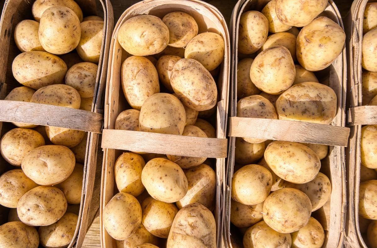 Fresh potatoes sit in three baskets.