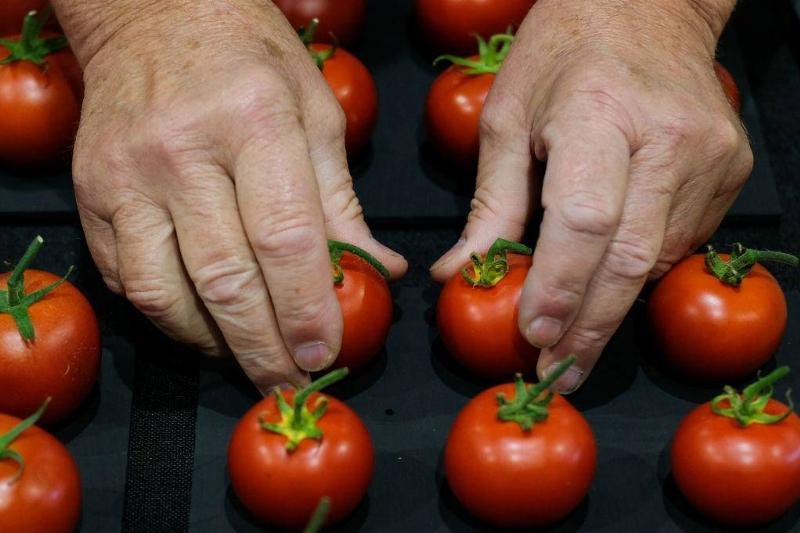 tomatoes-82035