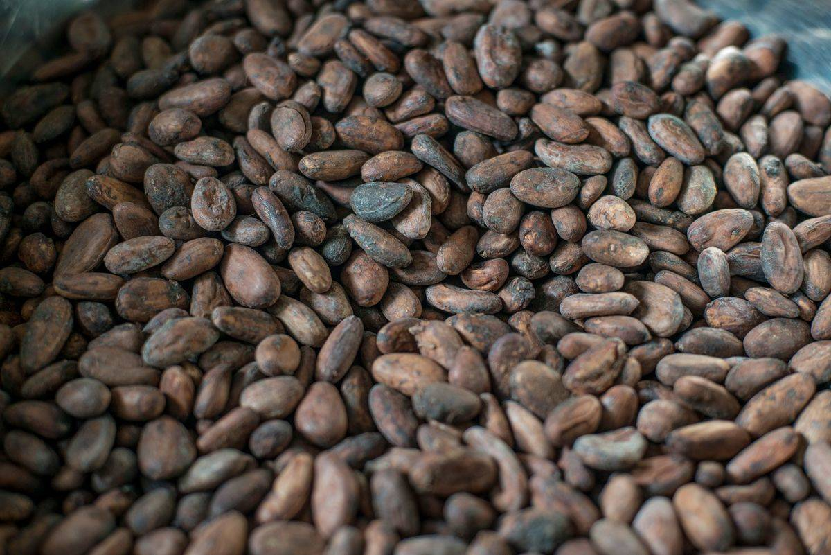 Hundreds of cocoa nibs lie in a pile.