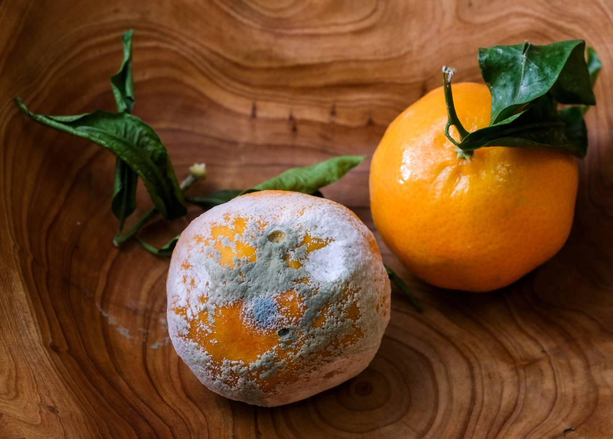 Two tangerines sit in a wooden bowl, one fresh, and one moldy.