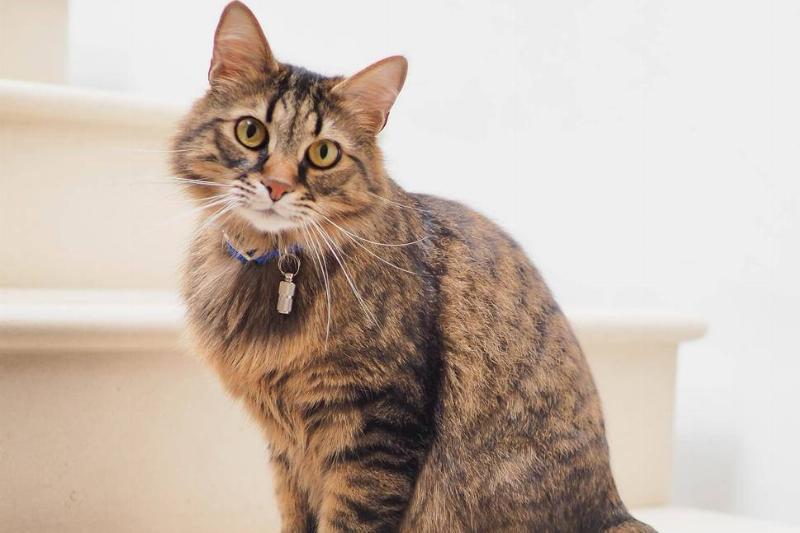 Picture of cat