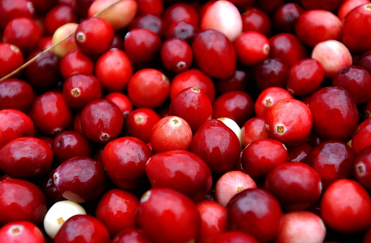 A close-up photo shows a pile of cranberries.