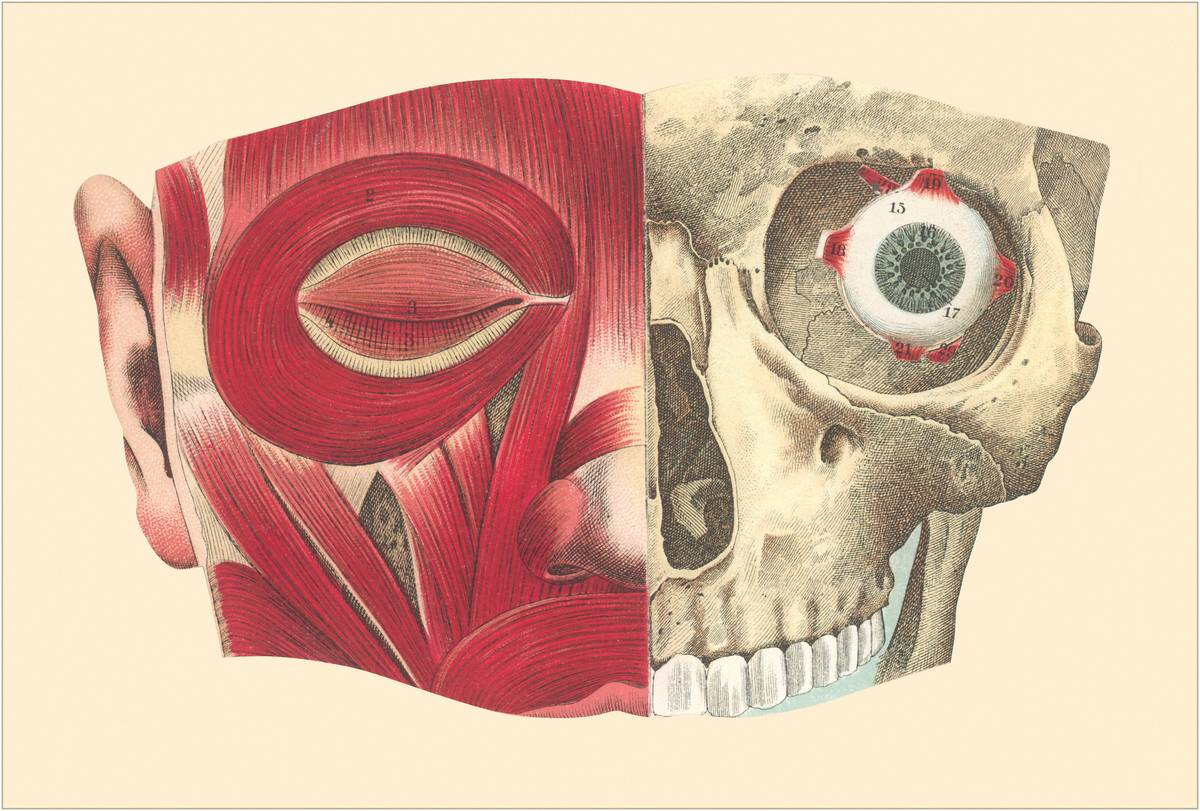 A vintage diagram shows the muscles around the eye.