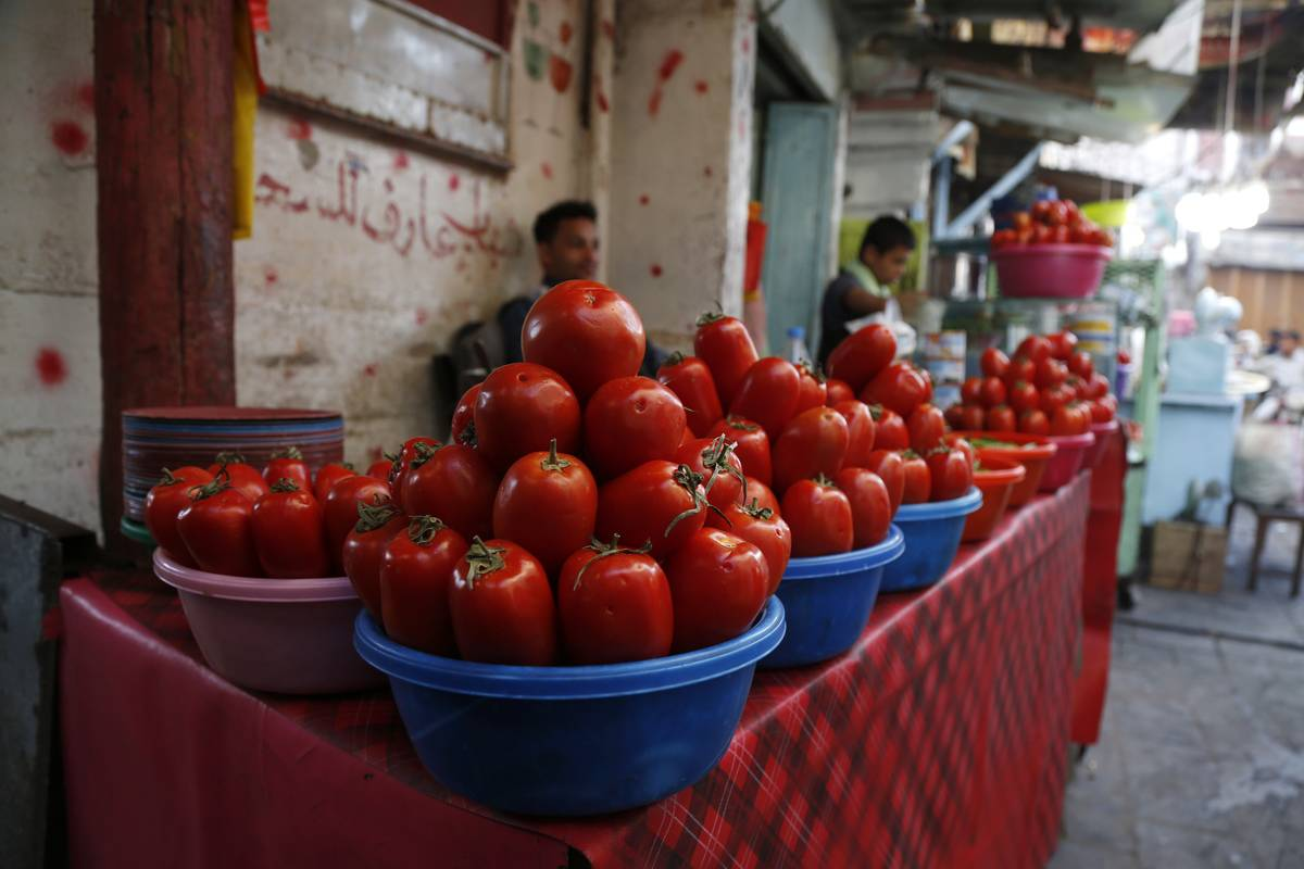 Circular tubs of tomatoes are lined on a table.