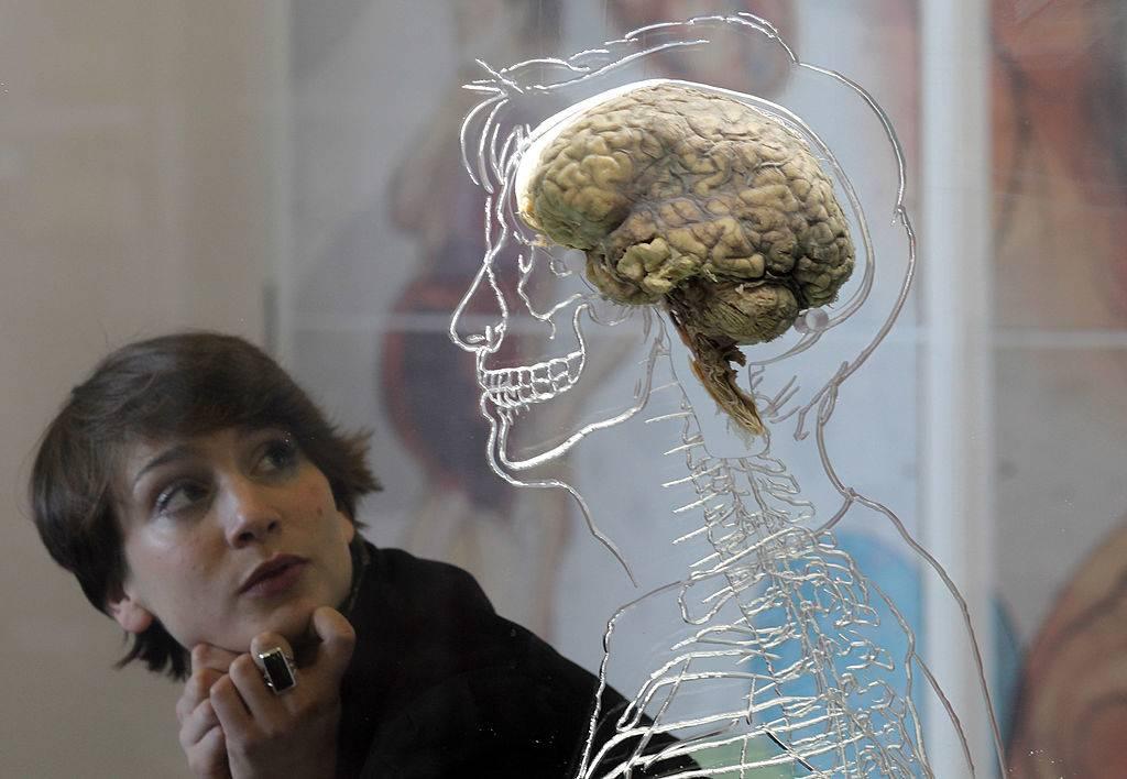 real human brain being displayed