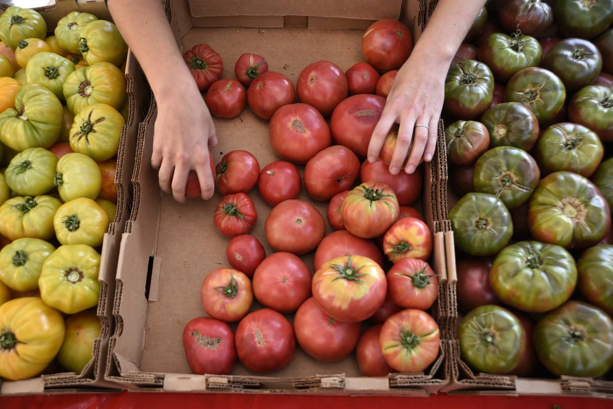 A person shops for tomatoes at a farmer's market.