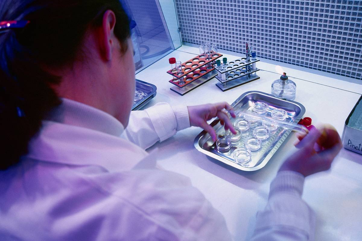 A laboratory technician Carries Out A Culture Test On Amniotic Cells.
