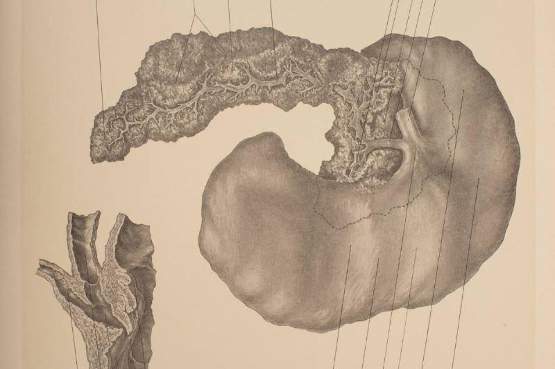 pancreas-diagram-150949358-39253