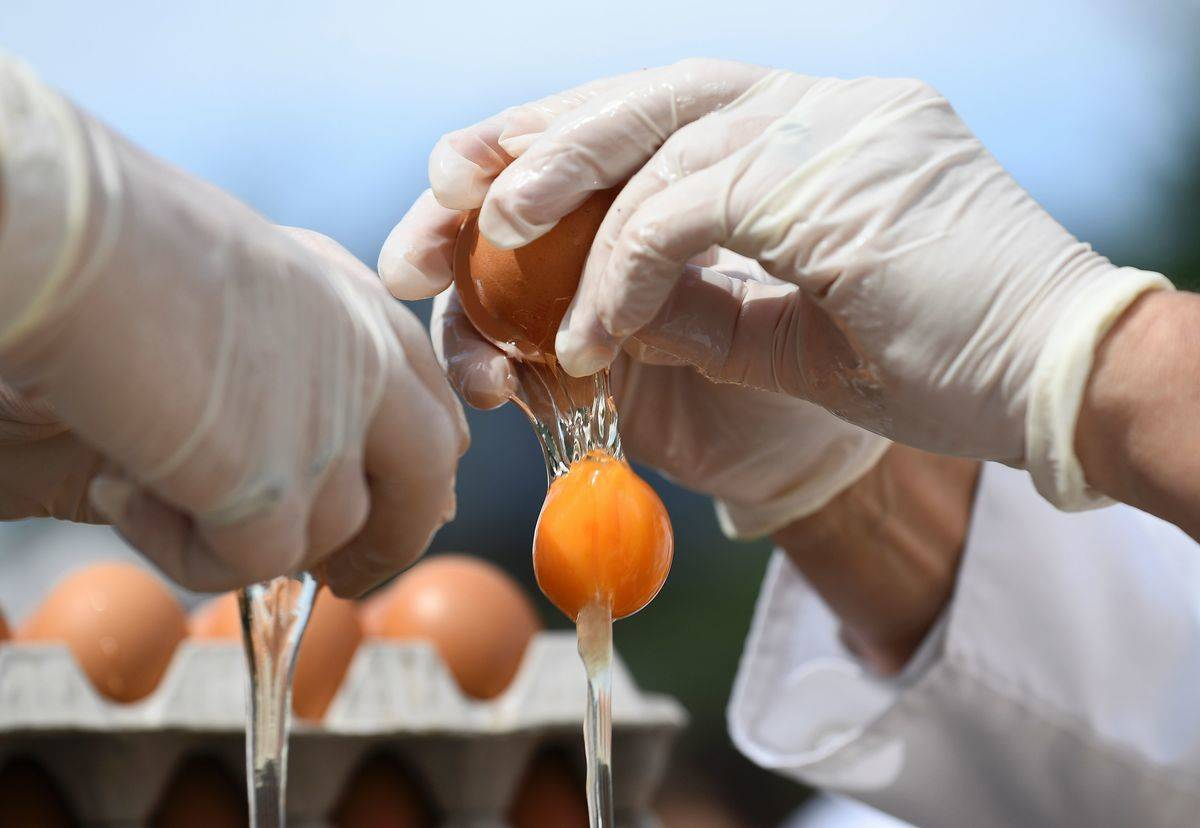 Chefs crack eggs open to make a big omelet.
