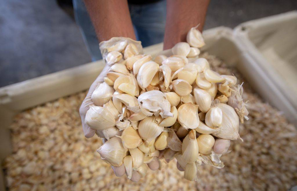 person holding up cloves of garlic