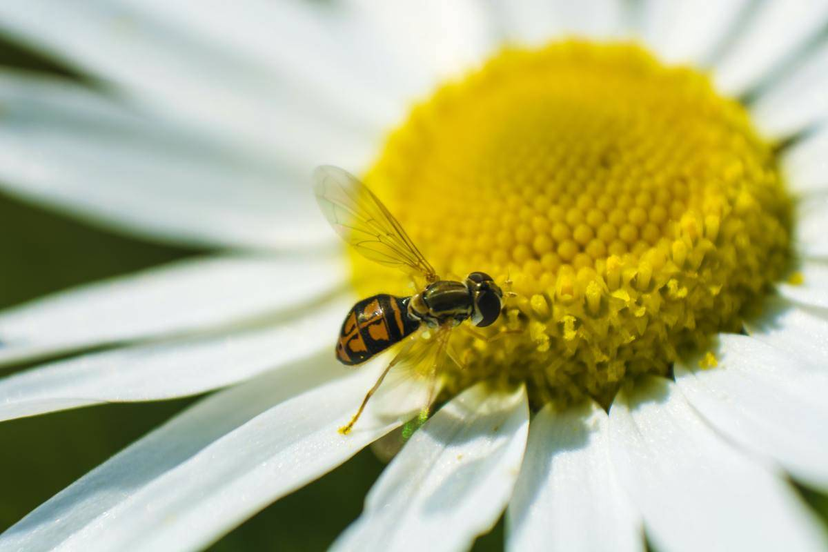 a bee getting some pollen from a flower