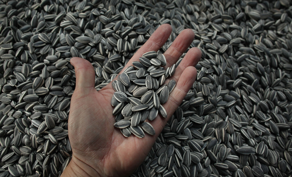 sunflower-seeds-hbp.jpg